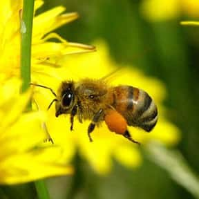 Where Do Bees Go To The Bathro is listed (or ranked) 22 on the list The Funniest Jokes For Kids