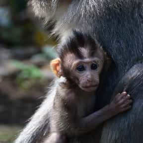 What Do You Call A Baby Monkey is listed (or ranked) 24 on the list The Funniest Jokes For Kids