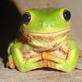 Why Are Frogs So Happy? is listed (or ranked) 7 on the list The Funniest Jokes For Kids