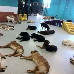 Doggie Day Care Owner is listed (or ranked) 25 on the list The Best Second Careers