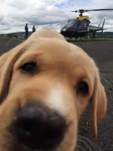 Helicopters Are Boring, Lookit is listed (or ranked) 1 on the list The 18 Greatest Animal Photobombs Ever