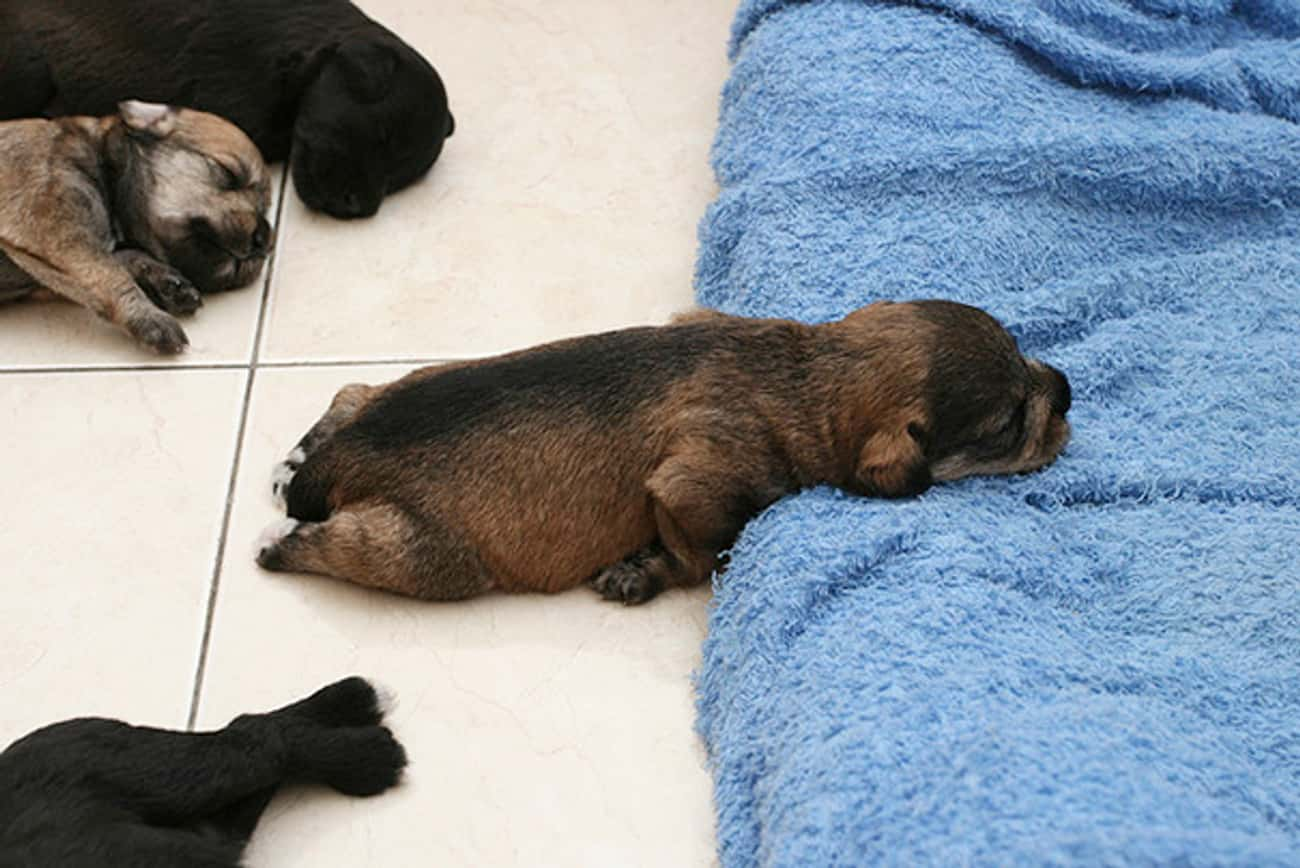 Close Enough is listed (or ranked) 1 on the list 30 Puppies Who've Had a Long Week