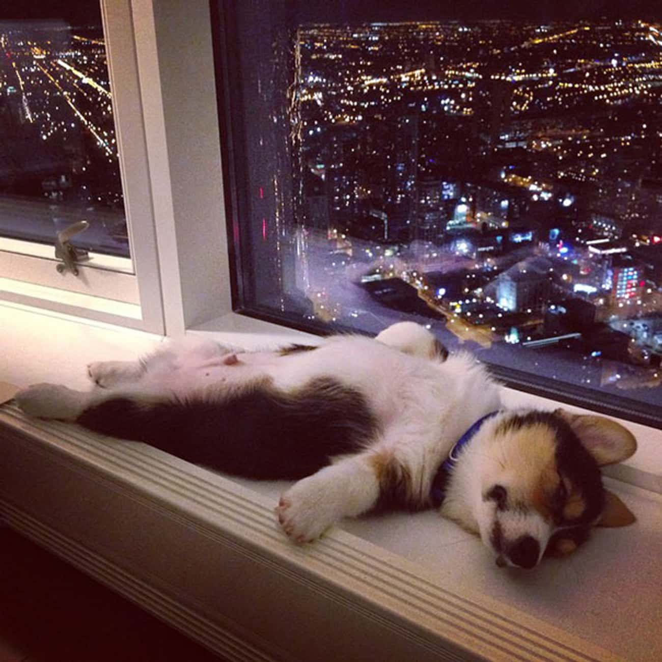 """""""I Shall Position Myself S is listed (or ranked) 4 on the list 30 Puppies Who've Had a Long Week"""
