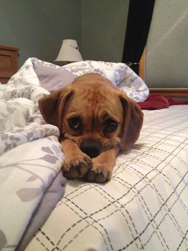 """""""But...Who Will I Cuddle W... is listed (or ranked) 4 on the list 27 Adorable Pets Who Are Sad to See You Go"""