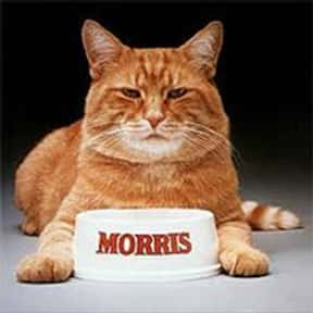 Morris the 9 Lives Cat Food Ca is listed (or ranked) 8 on the list The Greatest Animals in Commercials