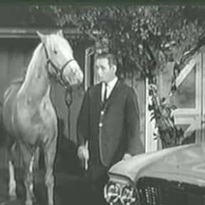 Mr. Ed (Studebaker Commercial) is listed (or ranked) 10 on the list The Greatest Animals in Commercials