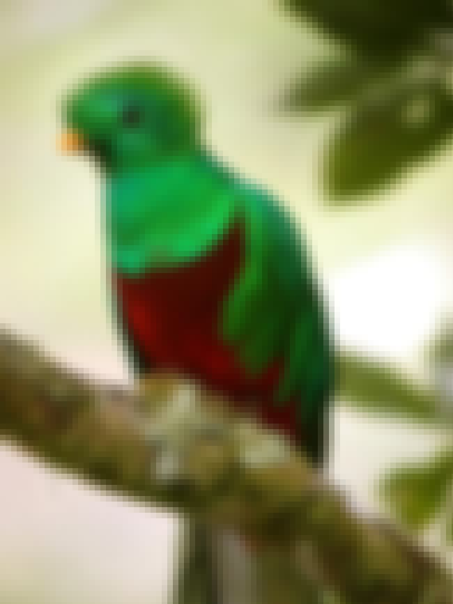 This Quirky Quetzal Who Is a S... is listed (or ranked) 4 on the list The Most Colorful Birds in the World