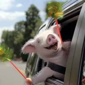Maxwell the Geico Pig is listed (or ranked) 6 on the list The Greatest Animals in Commercials