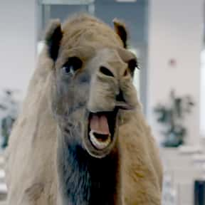 Geico Camel is listed (or ranked) 5 on the list The Greatest Animals in Commercials