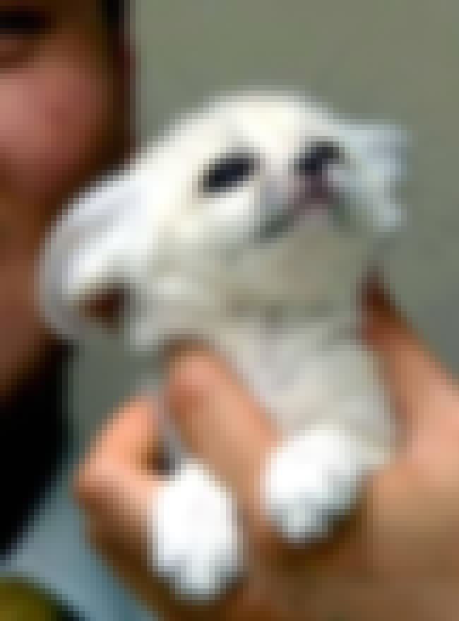 This Baby Fennec Fox Defies th... is listed (or ranked) 2 on the list The Cutest Animals That Fit Right on Your Finger