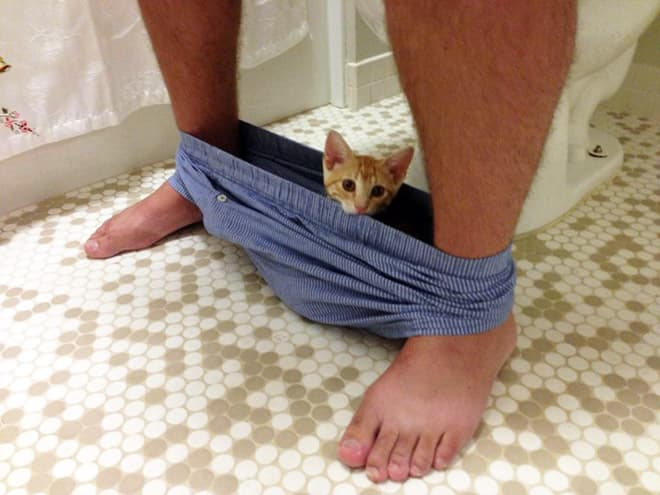 Random Pets Who Have Never Heard of Privacy