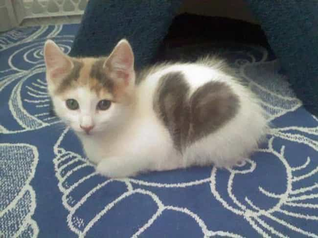 This Little Lady Wears H... is listed (or ranked) 2 on the list 36 Cats with Totally Cool Markings