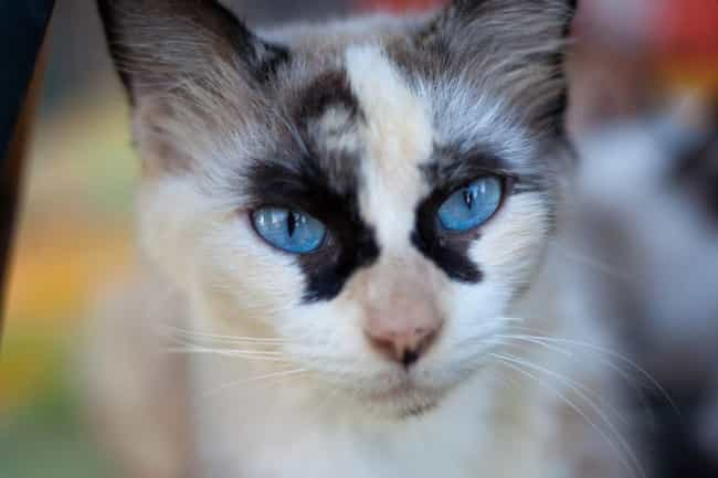 36 Cats with Totally Cool Markings