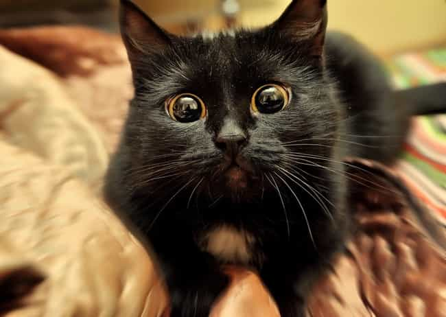 """Girl Cats Can Have How Ma... is listed (or ranked) 4 on the list 38 Cats with Crazy Eyes"