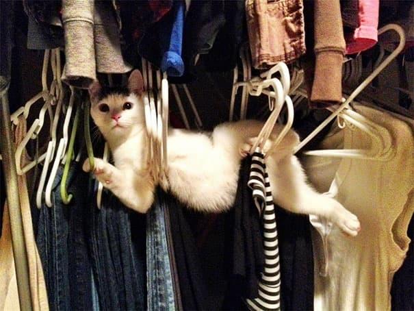 Random Photos That Cats Are Stuck