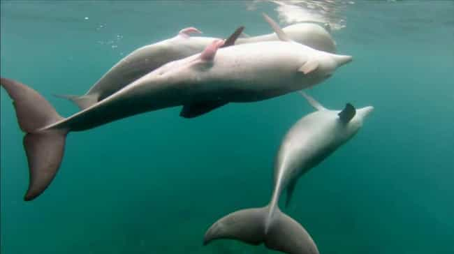 Male Dolphins Can Swivel Their... is listed (or ranked) 2 on the list Things You Didn't Know About Animal Sex