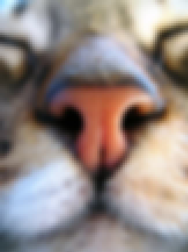 Cats All Have Unique Noses is listed (or ranked) 3 on the list Fun Facts You Should Know About Cats