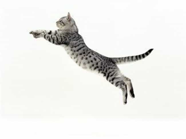 Cats Can Jump Six Times Their ... is listed (or ranked) 2 on the list Fun Facts You Should Know About Cats