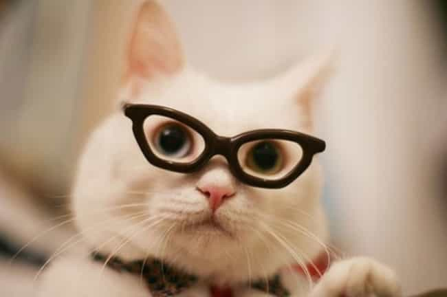 Hipster Cat's Favorite B... is listed (or ranked) 1 on the list The Cutest Nerd Cats on the Internet
