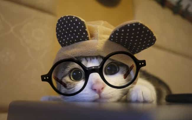 Unique Cat Searches for ... is listed (or ranked) 3 on the list The Cutest Nerd Cats on the Internet