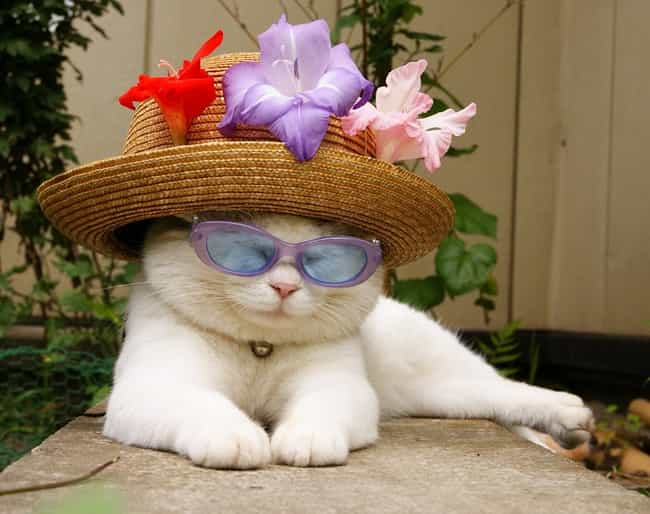 Florida Cat Boasts Coole... is listed (or ranked) 4 on the list The Cutest Nerd Cats on the Internet