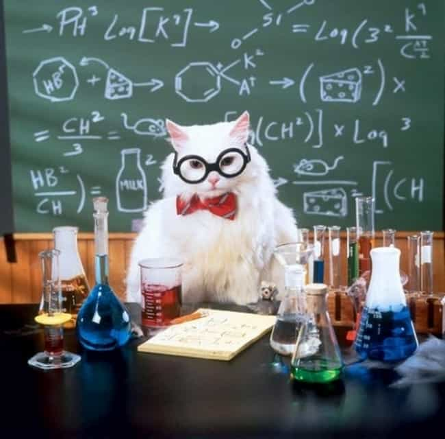 Most of Chemistry Joke Cat&#39... is listed (or ranked) 1 on the list The Cutest Nerd Cats on the Internet