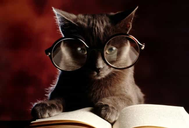 Debate Cat Assures You, He Has... is listed (or ranked) 4 on the list The Cutest Nerd Cats on the Internet