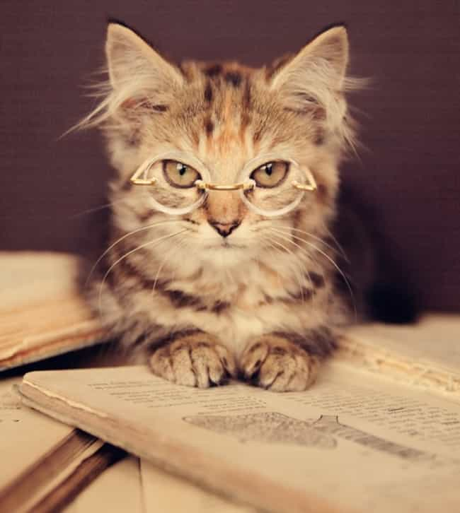 Literary Cat Finds Your Use of... is listed (or ranked) 3 on the list The Cutest Nerd Cats on the Internet