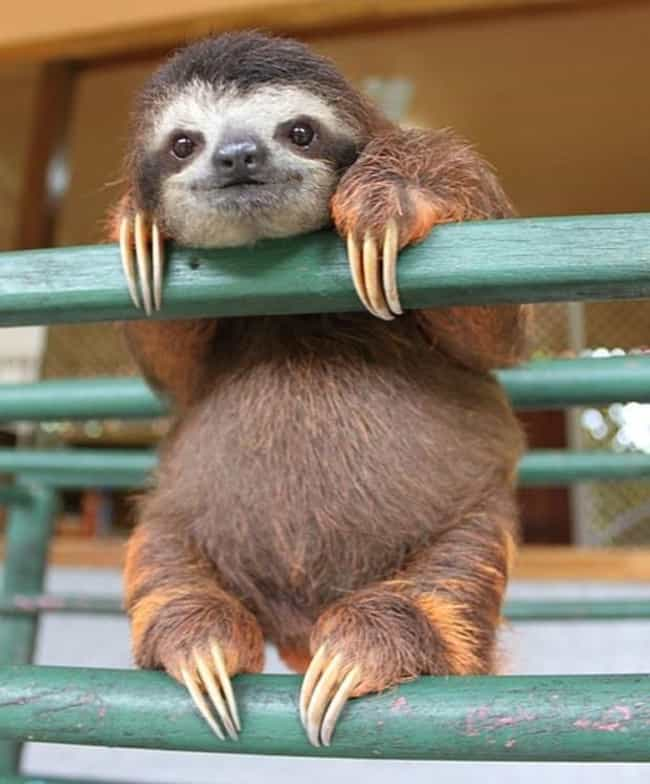 This Sloth Is Just Happy... is listed (or ranked) 1 on the list 31 Animals Who Are Loving Life