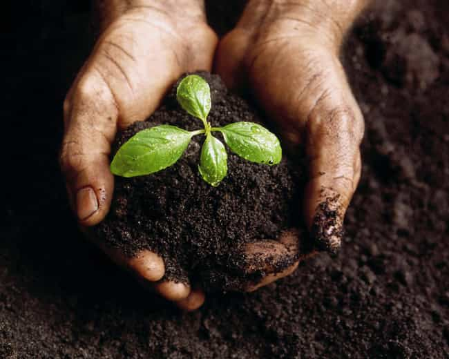 Quality Soil is listed (or ranked) 3 on the list 17 Things the World Is Running Out Of