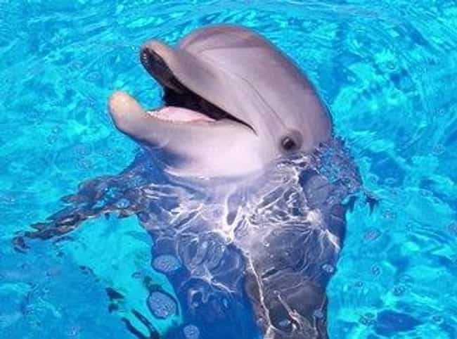 Dolphins Give Birth Differentl... is listed (or ranked) 2 on the list 23 Fun Facts You Should Know About Dolphins