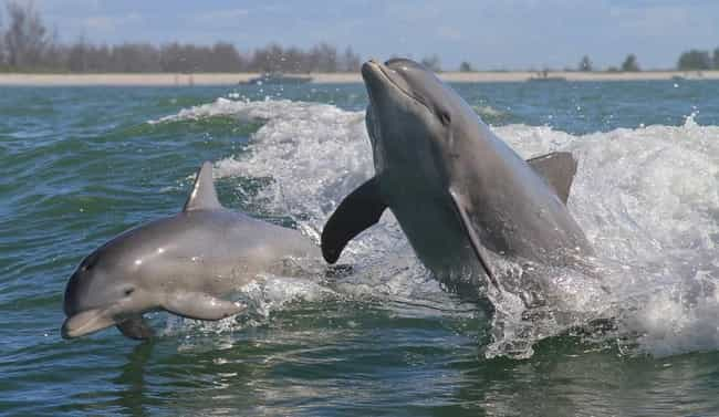Dolphins Have Midwifes During ... is listed (or ranked) 3 on the list 23 Fun Facts You Should Know About Dolphins