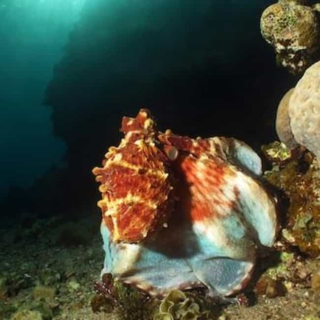 Gurita, Hewan aneh dan Fakta uniknya