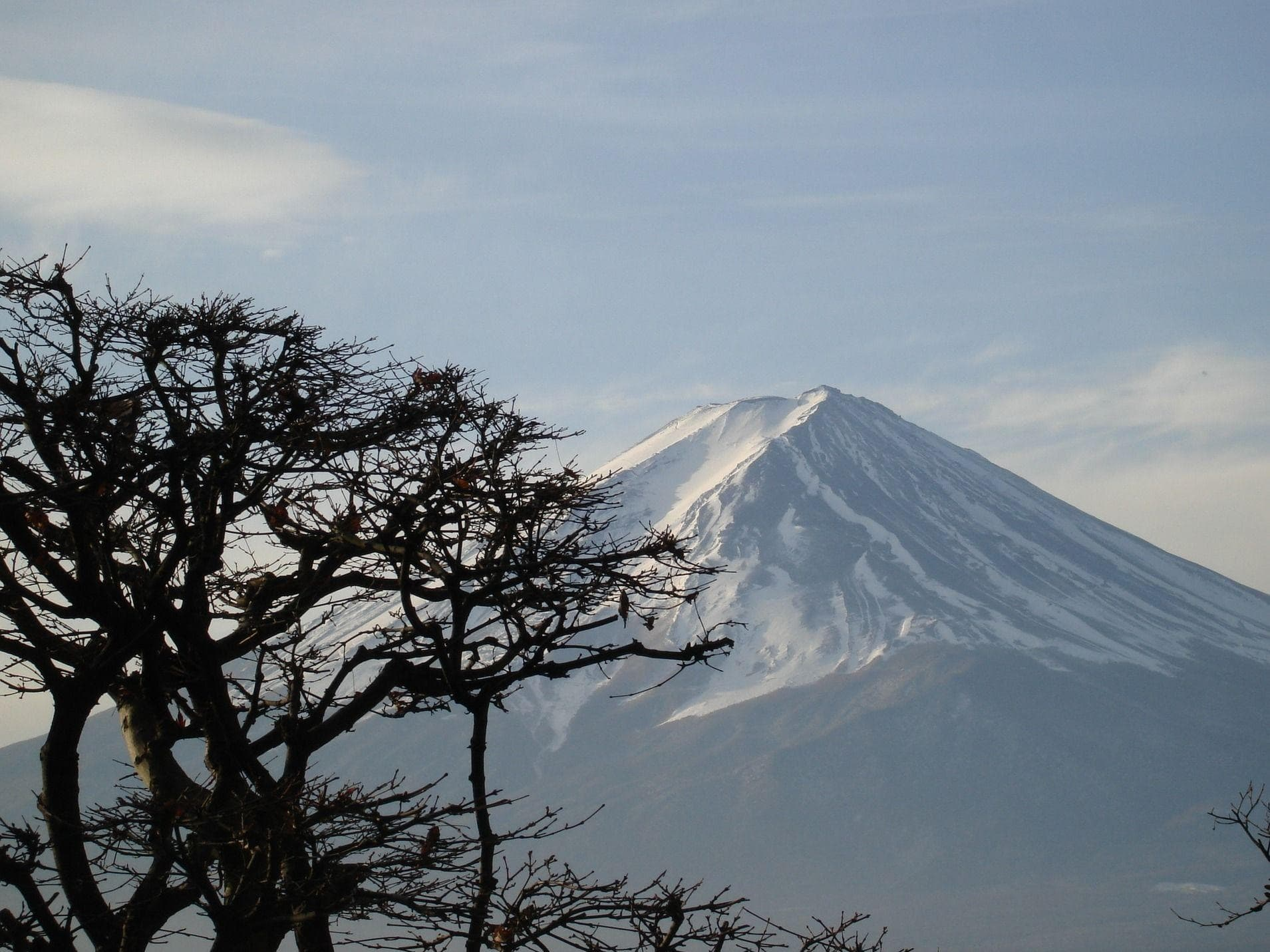 Random Haunting Facts About Japan's Suicide Forest
