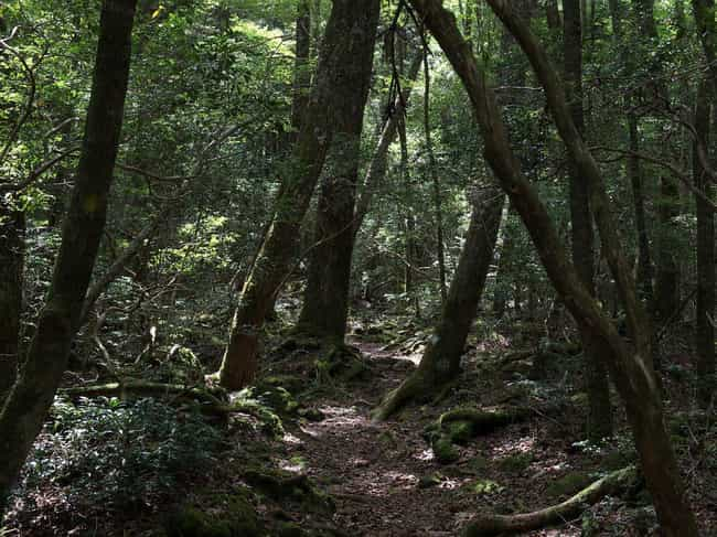 It's the Place With The Se... is listed (or ranked) 6 on the list Haunting Facts About Japan's