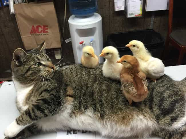 Ladies' Man Kitty Can'... is listed (or ranked) 4 on the list 28 Cats Who Are Also Tables