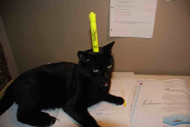 Comedian Kitty Strives to Be t... is listed (or ranked) 3 on the list 28 Cats Who Are Also Tables