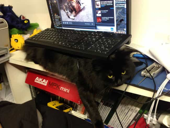 The Keyboard Finally Takes Its... is listed (or ranked) 2 on the list 28 Cats Who Are Also Tables