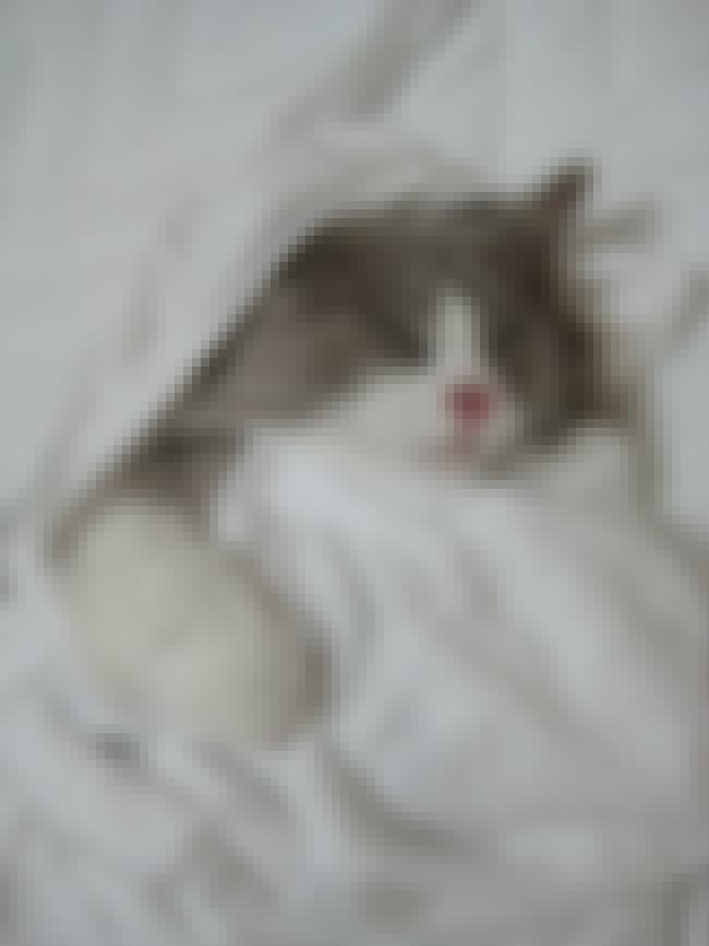This Fuzzy Furball Has Sweet D... is listed (or ranked) 2 on the list 26 Kitties Who Are All Ready for Bed