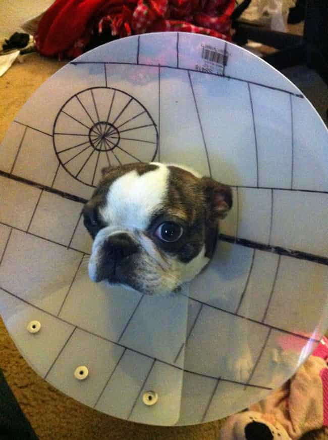 This Little Death Star W... is listed (or ranked) 3 on the list Animals Making the Most of Their Cones of Shame