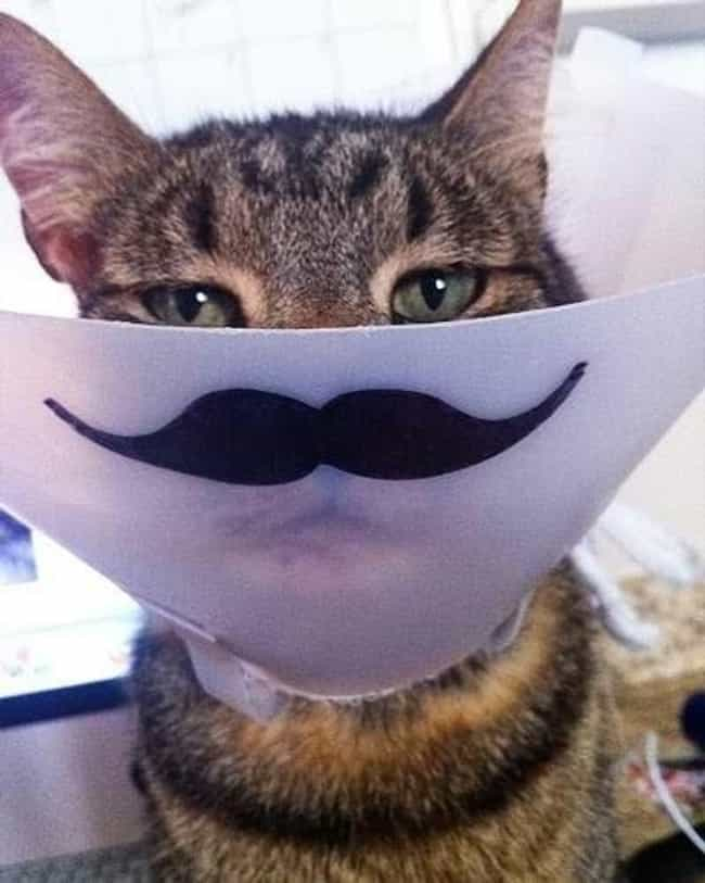 This Master of Disguise ... is listed (or ranked) 2 on the list Animals Making the Most of Their Cones of Shame