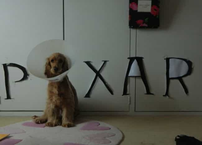 This Pup Proudly Channels the ... is listed (or ranked) 3 on the list Animals Making the Most of Their Cones of Shame