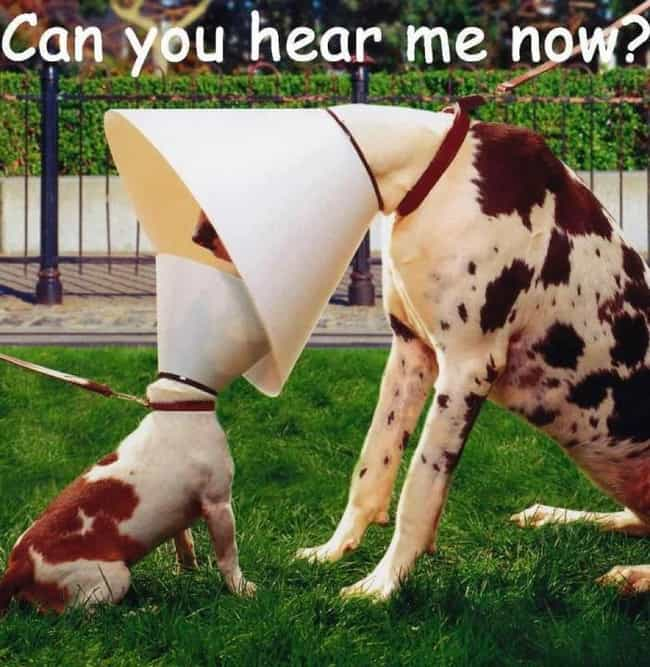 This Unlikely Couple Uses This... is listed (or ranked) 4 on the list Animals Making the Most of Their Cones of Shame