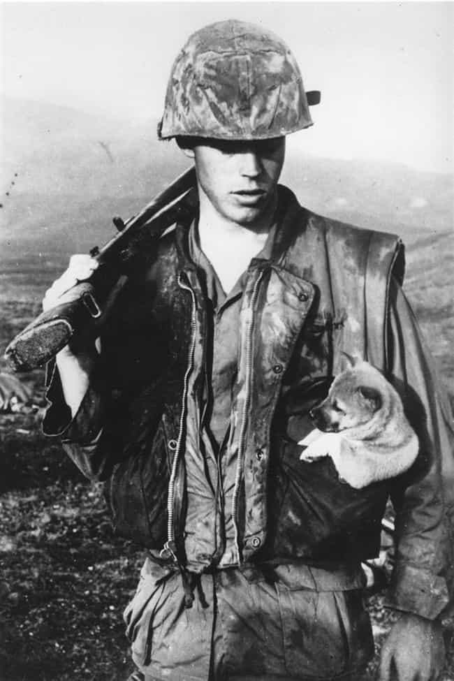 Soldier with a Puppy in His Ve... is listed (or ranked) 1 on the list Cool Old School Pictures From Vietnam
