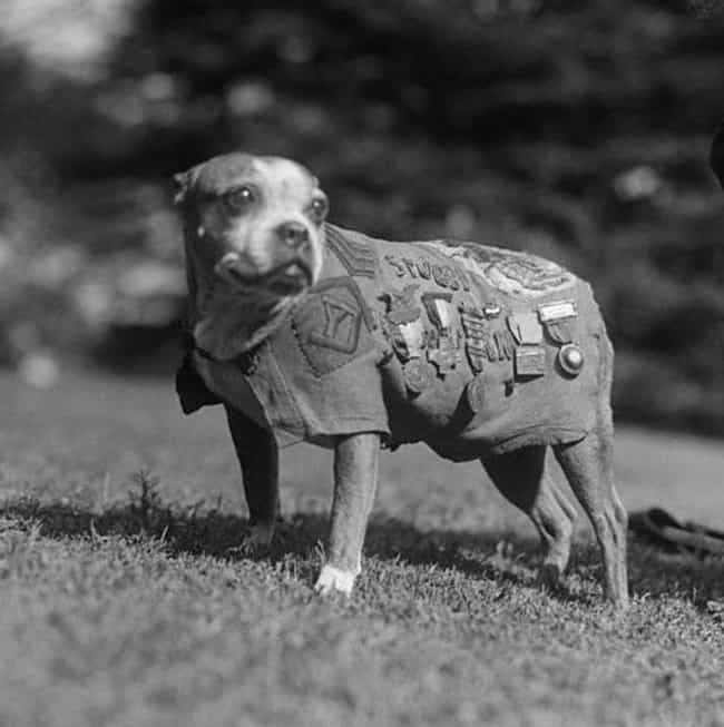 Stubby, England's Most D... is listed (or ranked) 3 on the list Old School World War 1 Pictures