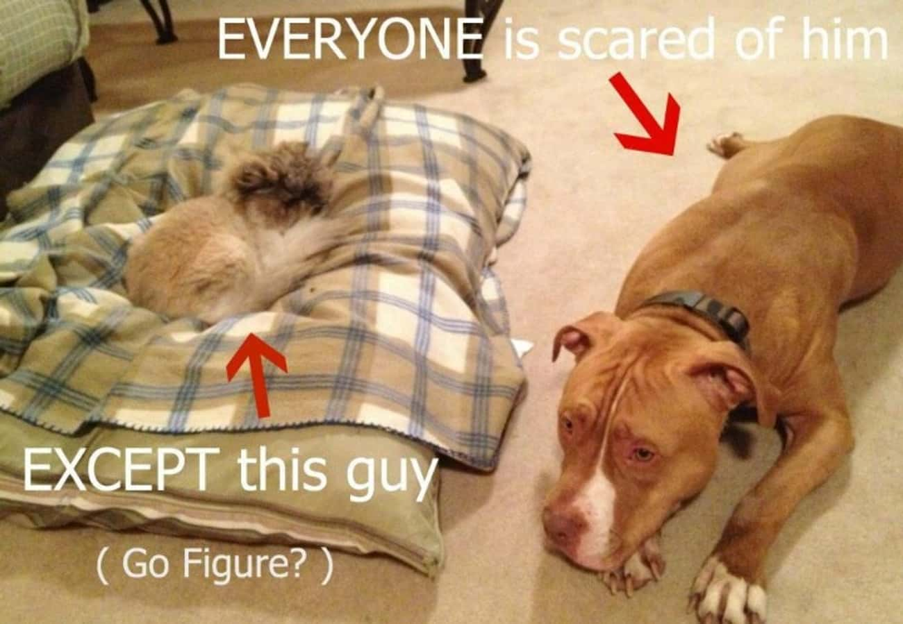 'Your Bed Has Been Commandeere is listed (or ranked) 4 on the list 15 Dogs Who Are Terrified of Cats