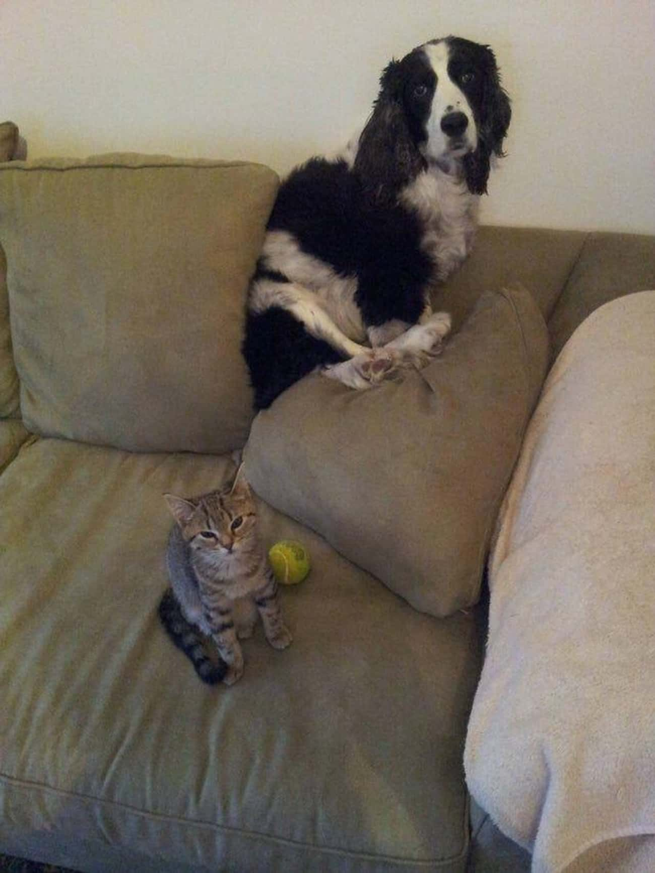 No Remorse About Taking That B is listed (or ranked) 3 on the list 15 Dogs Who Are Terrified of Cats