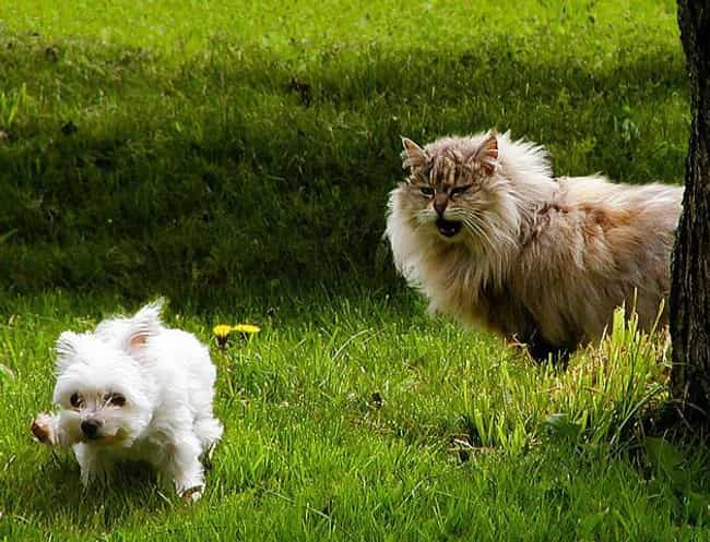 """""""Screw Pride, That ... is listed (or ranked) 4 on the list 20 Dogs Who Are Terrified of Cats"""