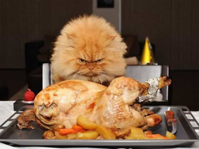 This Guy Is Pissed About His E... is listed (or ranked) 1 on the list Animals Who Are Thankful for Nothing