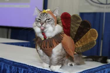This Kitty Can't Even with is listed (or ranked) 2 on the list Animals Who Are Thankful for Nothing